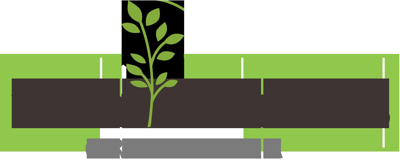 MTM Naturals Organic Tea